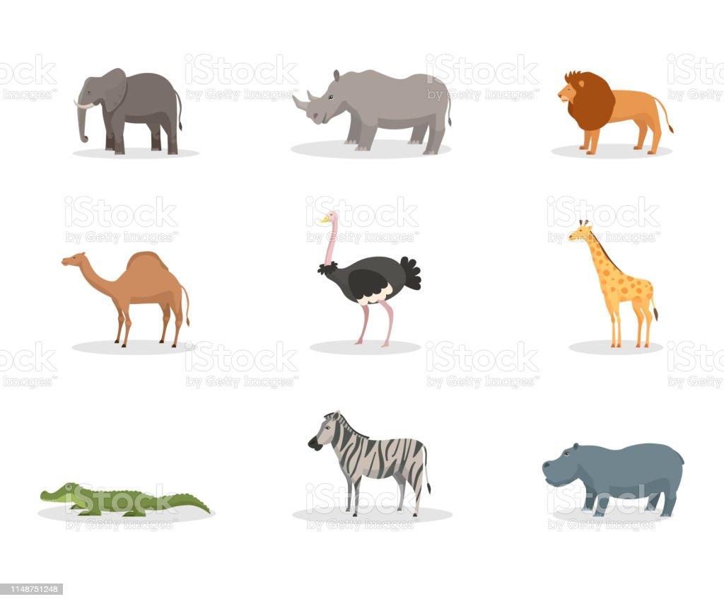 Exotic Wild Animals Flat Vector Illustration Set Stock Illustration -  Download Image Now - iStock