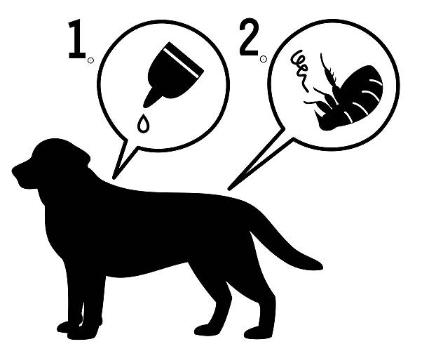 extermination of fleas extermination of fleas for dogs. parasitic stock illustrations