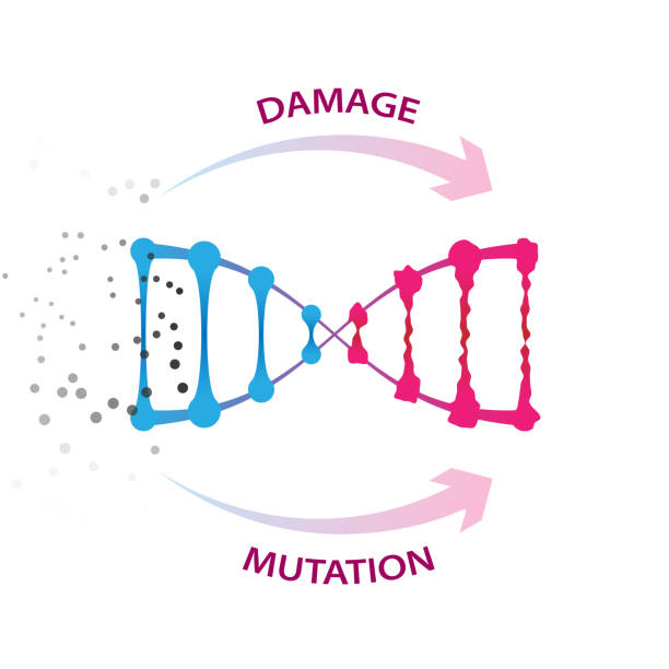 External factors that cause dna damage and mutations vector art illustration