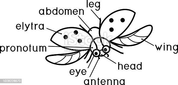 Ilustración de Estructura Externa De Insectos Para