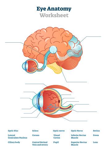 Eye Anatomy Blank Worksheet Printable Test Illustrations ...
