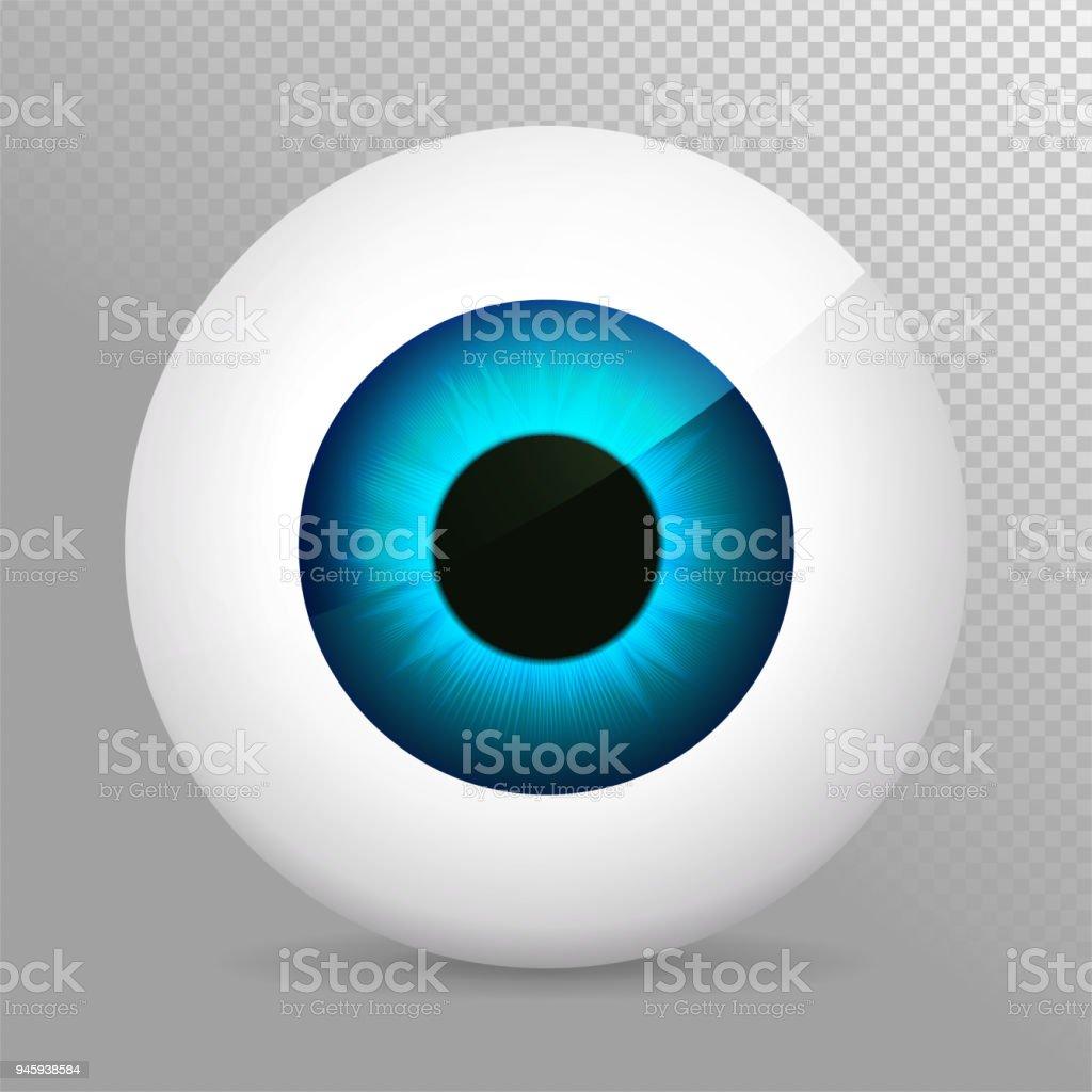 Auge Blau Realistische 3d Indigo Augapfelvektorillustration Echte ...