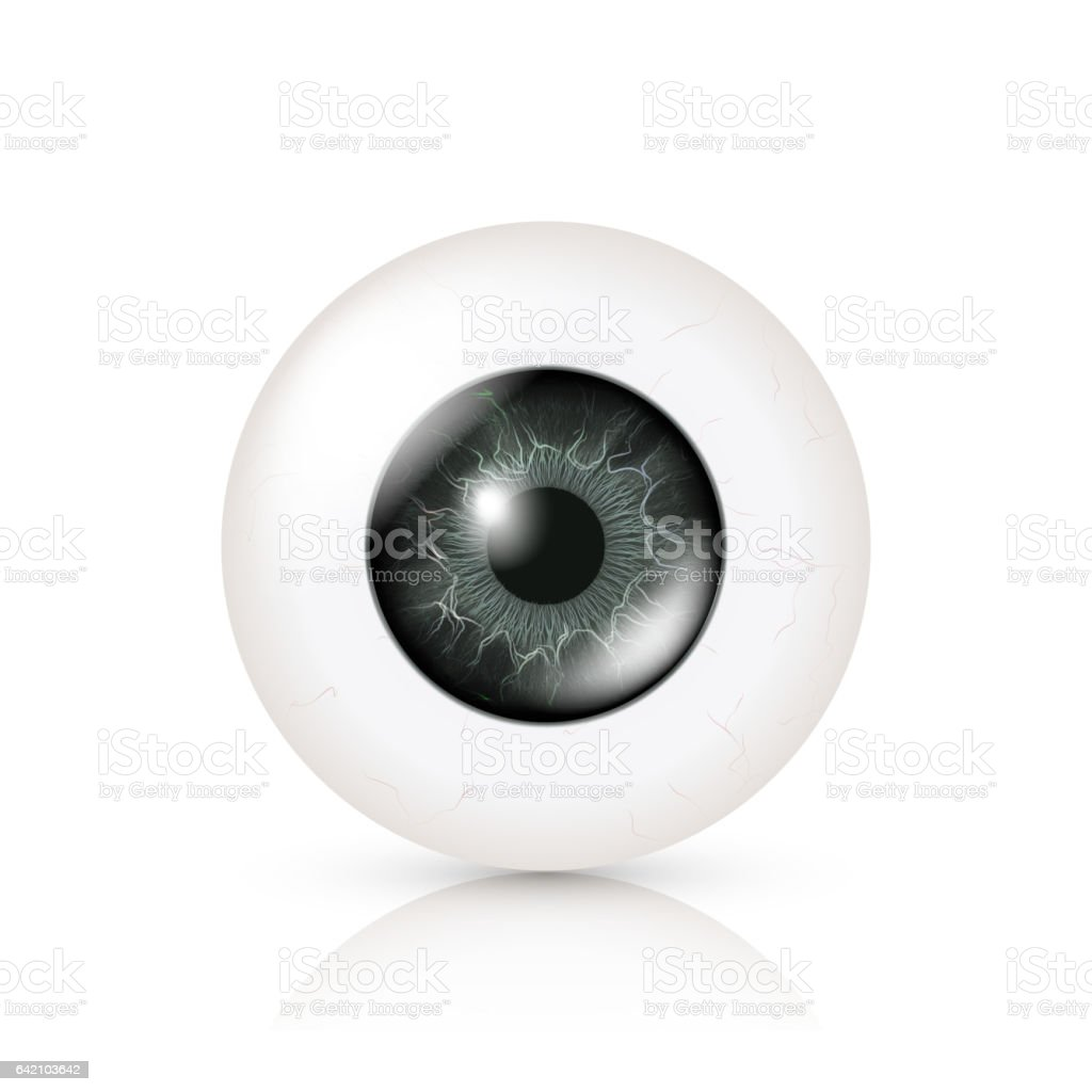 Das Auge Ist Realistisch Vektorillustration 3d Menschlichen Glossy ...