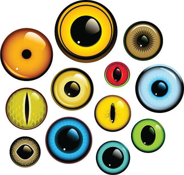 Eye Set Collection of human and animal eyes. Download contains EPS8, AI10, SVG and JPG animal eye stock illustrations