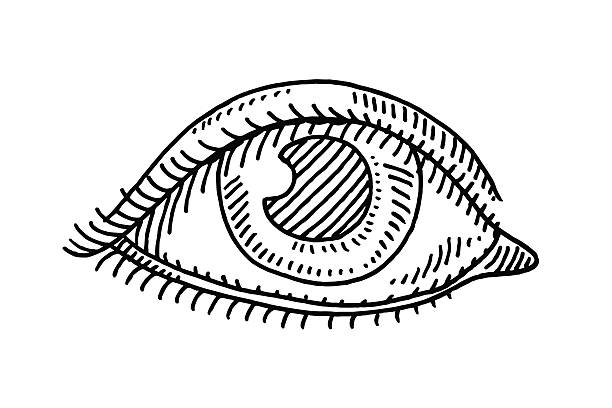 Eye Symbol Drawing Hand-drawn vector drawing of an human Eye Symbol. Black-and-White sketch on a transparent background (.eps-file). Included files are EPS (v10) and Hi-Res JPG. environment stock illustrations