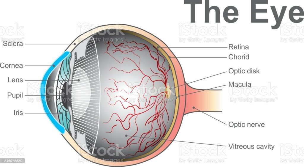 eye system vector art illustration