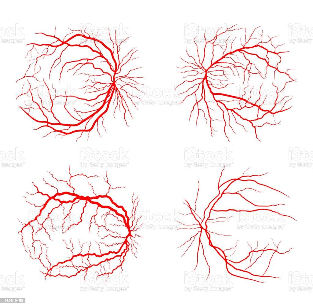 Auge Vene Set System X Rayangiographievektordesign Isoliert Auf ...