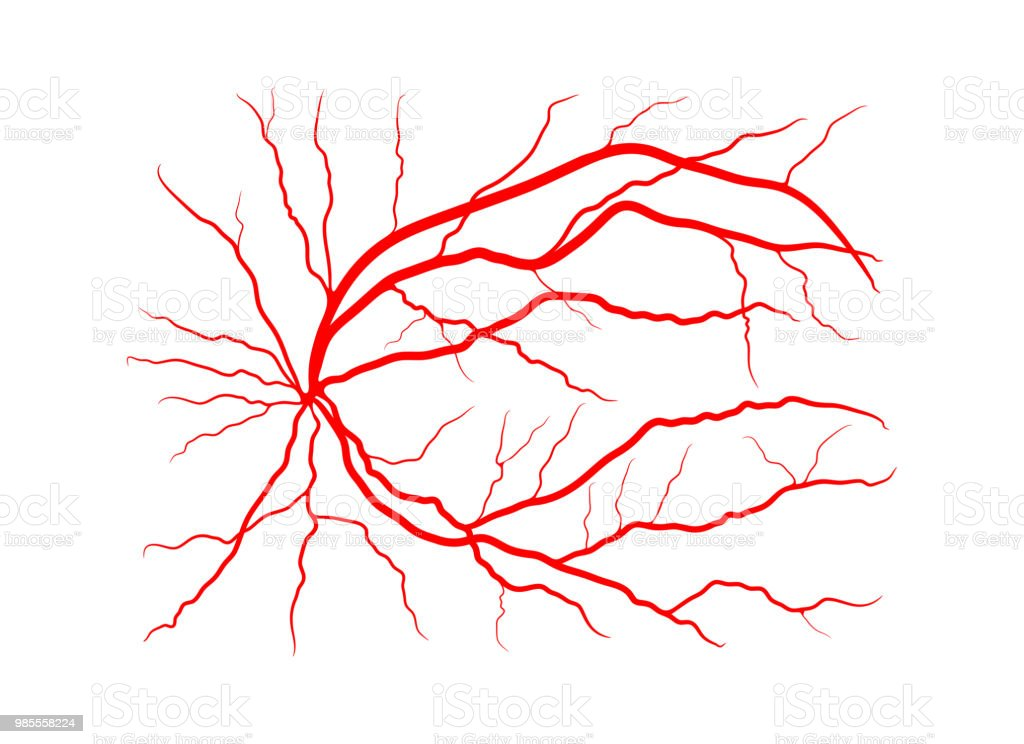 eye vein system x ray angiography vector design isolated on white vector art illustration