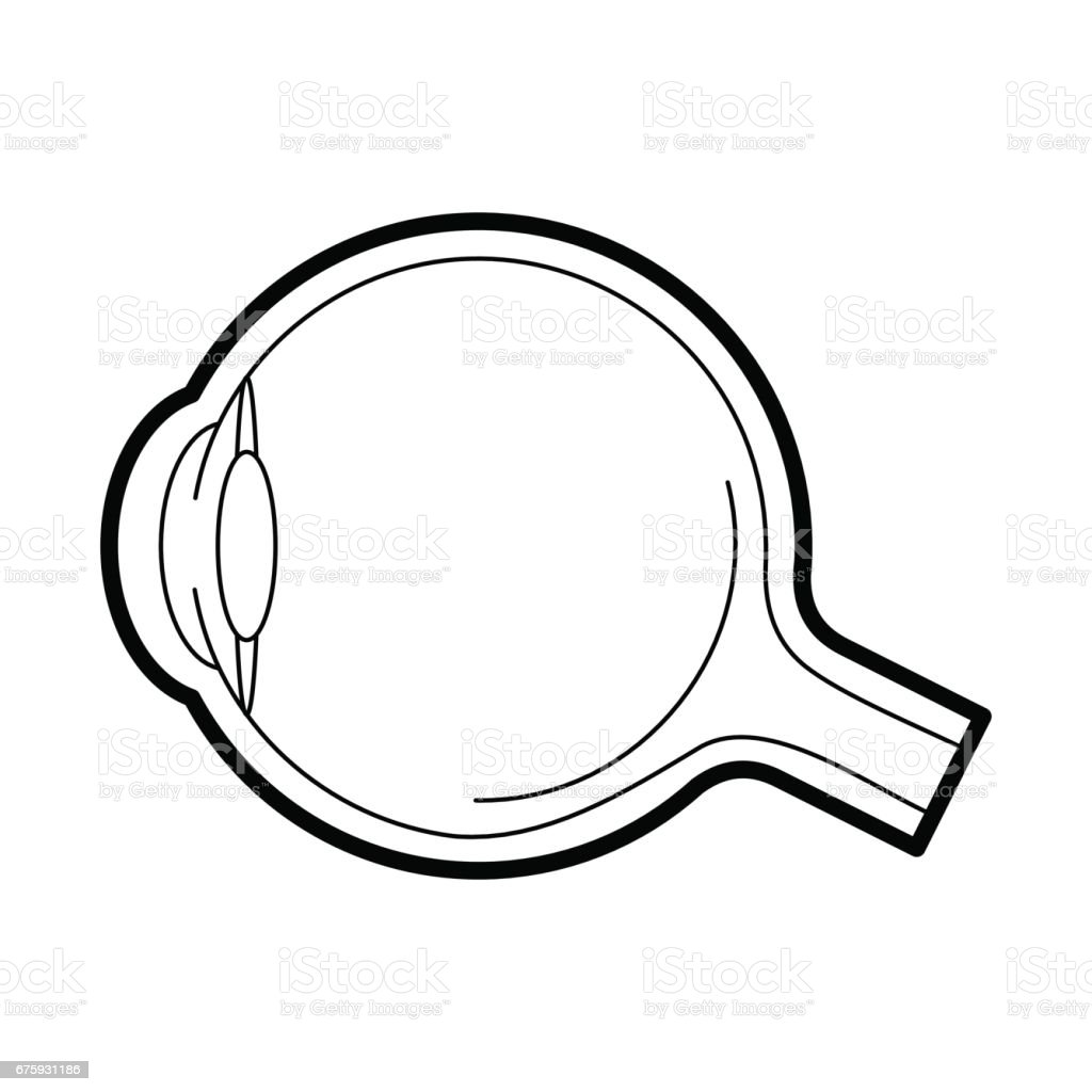 Eyeball Anatomy Icon Vector Illustration Stock Vector Art & More ...