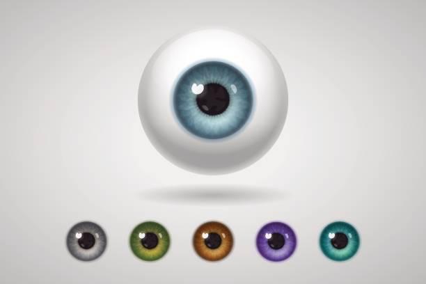 eyeball and colored irises - глазное яблоко stock illustrations