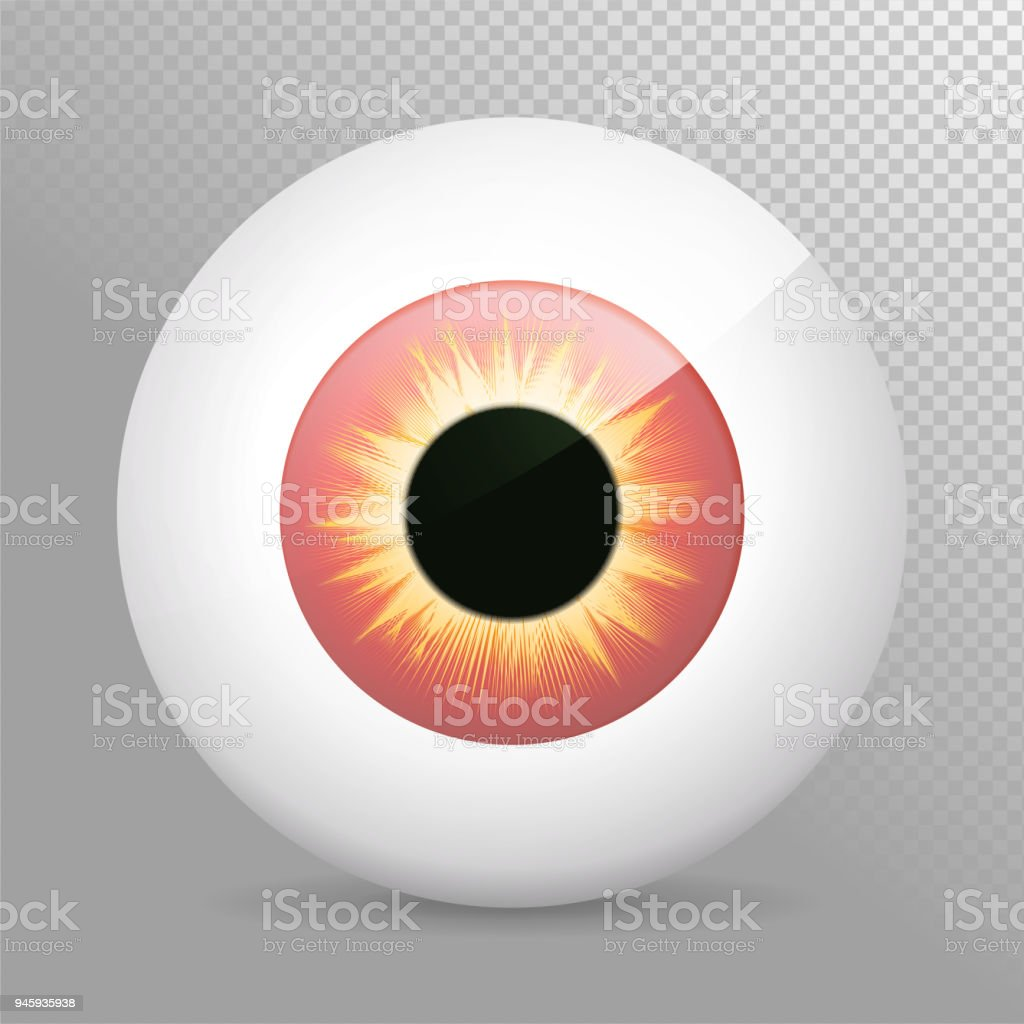 Eyeballyelloweye Rot Realistische 3d Rote Augapfelvektorillustration ...