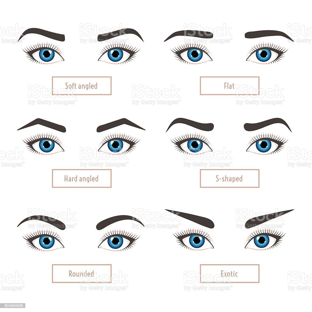 Eyebrow Shape Types Vector Illustration Of Eyebrows With Eyes Stock