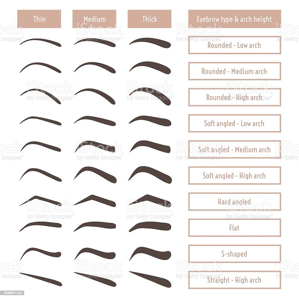 Eyebrow shapes. Various brow types. Table of eyebrow forms. – Vektorgrafik