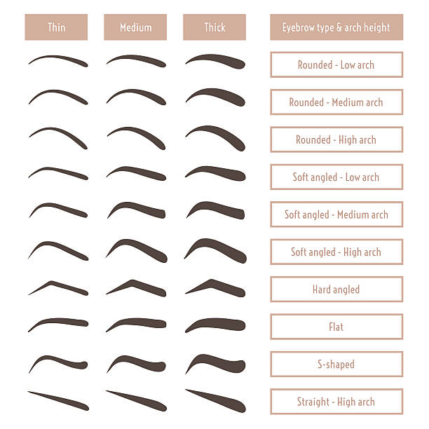 Eyebrow Illustrations, Royalty-Free Vector Graphics & Clip
