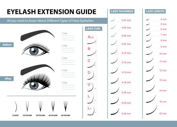 睫毛延長指南。不同類型的假睫毛。圖表向量圖。化妝品和化妝程式的範本。培訓海報 - 睫毛 幅插畫檔、美工圖案、卡通及圖標
