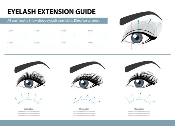 Eyelash extension guide. Direction schemes. Tips and tricks for lash extension. Infographic vector illustration. Template for Makeup and cosmetic procedures. Training poster vector art illustration