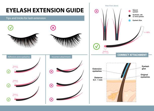 睫毛延長指南。提示和技巧的睫毛延長。圖表向量圖。正確和不正確的附件。培訓海報 - 睫毛 幅插畫檔、美工圖案、卡通及圖標