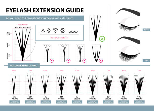 Eyelash extension guide. Volume eyelash extensions. 2D - 10D Volume. Tips and tricks. Infographic vector illustration. Template for Makeup and cosmetic procedures. Training poster vector art illustration