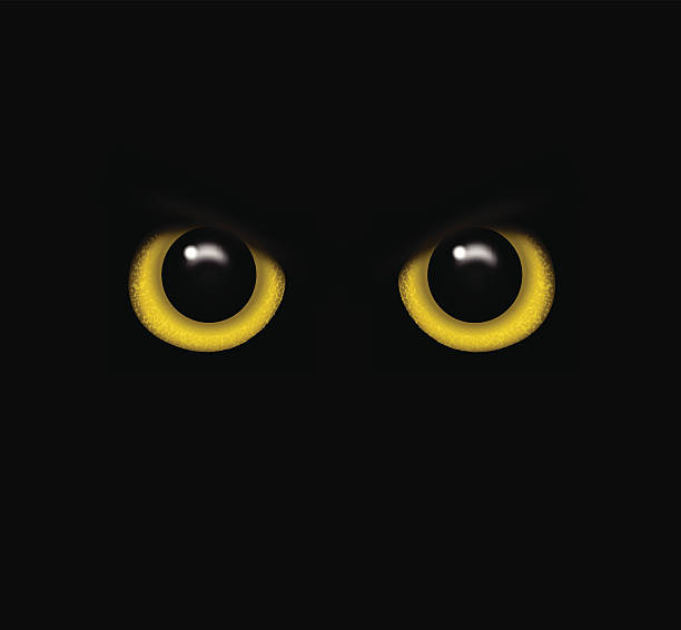 Eyes of a wild animal in the darkness vector Eyes of a wild animal in the darkness vector animal eye stock illustrations
