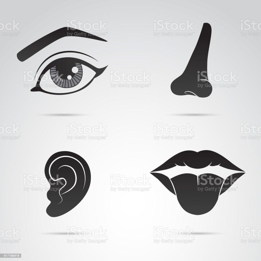 Stellen Sie Elemente Symbol Satz Nase Auge Ohr Lippen Vektorgrafiken ...