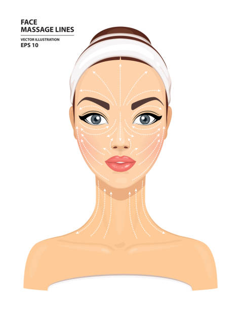 臉部按摩線。美麗的女人的臉被孤立的白色背景。面部美容治療模型。皮膚護理的概念。向量插圖 - 美麗的人 幅插畫檔、美工圖案、卡通及圖標