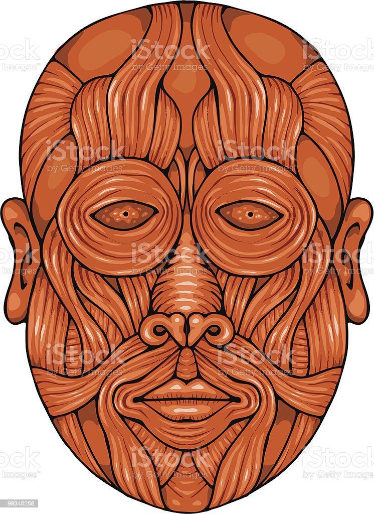 Los Músculos Faciales Illustracion Libre de Derechos 98345258   iStock