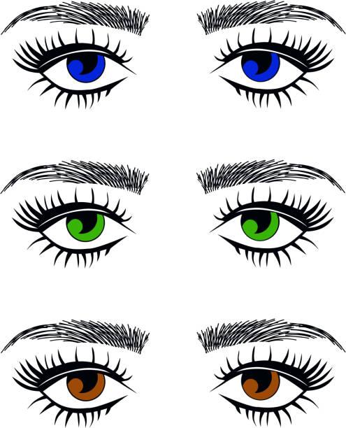 face, nose, blue, hazel, green eyes vector art illustration