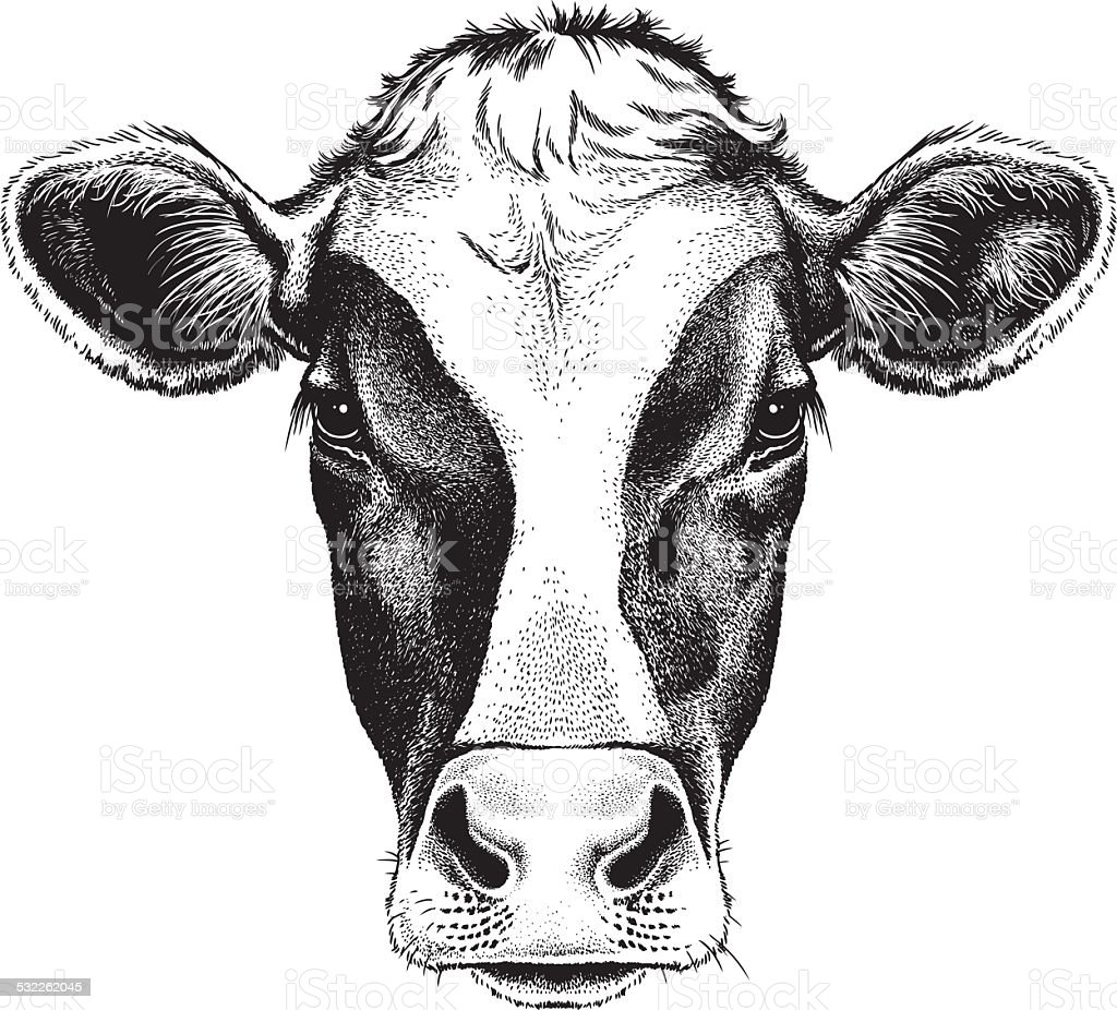 Face of a Cow vector art illustration