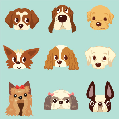 faces of dogs