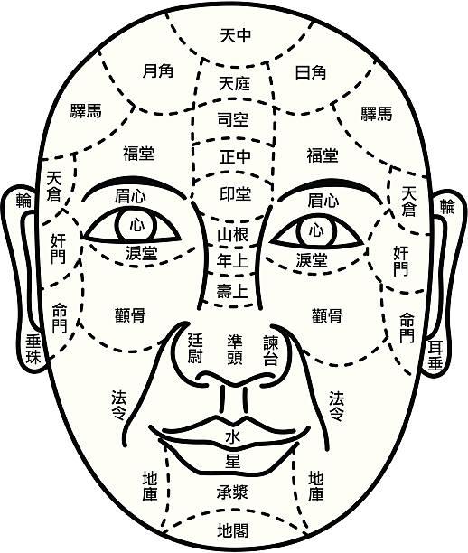 bildbanksillustrationer, clip art samt tecknat material och ikoner med facial fortune telling diagram - acupuncture