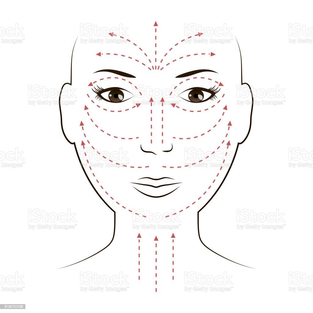 Facial Massage Lines for Applying Cream on Face vector art illustration