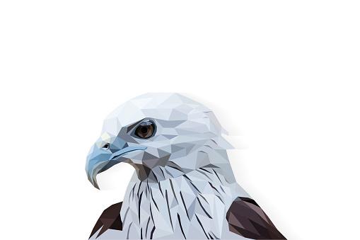falcon polygon