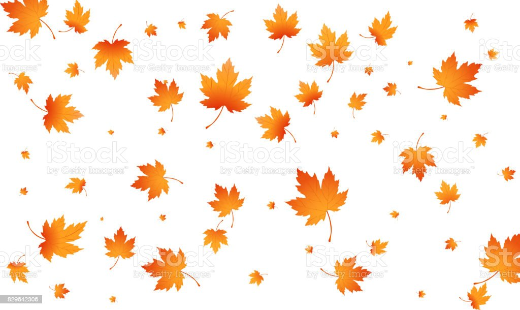 Fall autumn leaves background. Flying maple leaves isolated. Vector autumn background vector art illustration