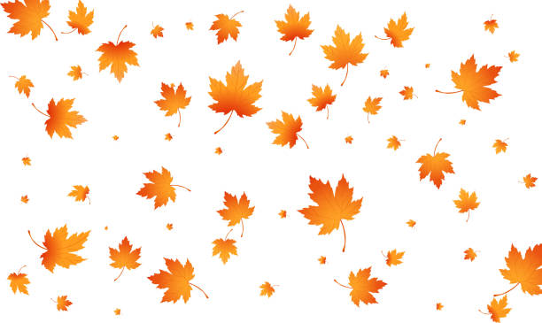 Fall autumn leaves background. Flying maple leaves isolated. Vector autumn background Fall autumn leaves background. Flying maple leaves isolated. Vector autumn background. maple leaf stock illustrations