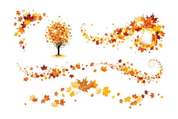 Fall decor elements Autumn nature design elements. Tree, branch with leaves, fall decor. Maple leaves design. fall leaves stock illustrations