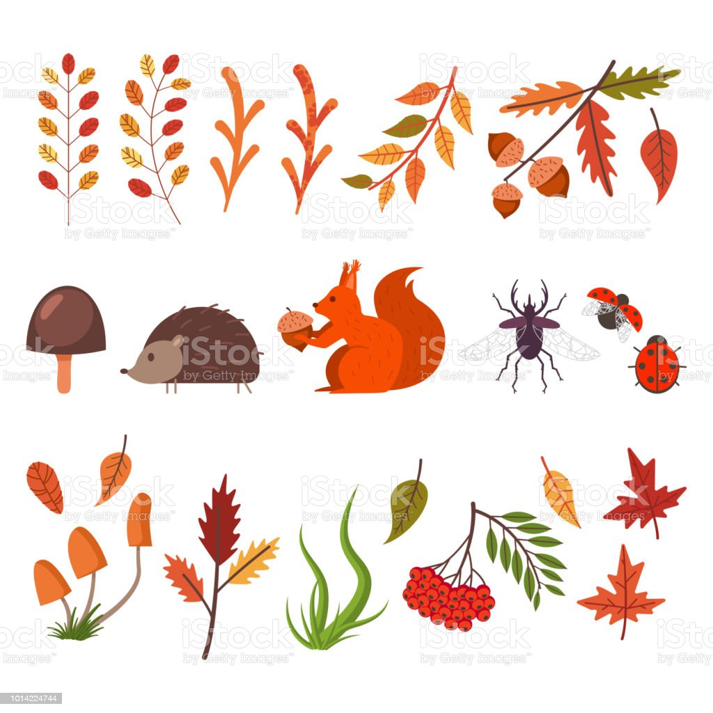 Fall Decorative Elements Autumn Leaves Grass Mushrooms Animals And Bugs  Vector Flat Simple Icons Set Isolated On White Background Stock  Illustration -