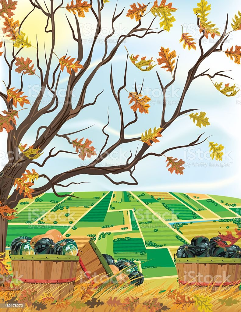 Fall Farm Harvest of Squash Under A Tree vector art illustration