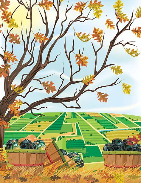 """herbst farm """"harvest squash unter einem baum - herbstgemüseanbau stock-grafiken, -clipart, -cartoons und -symbole"""