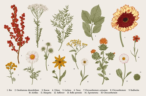 Vintage vector botanical illustration. Set. Autumn flowers, berry and leaves. Colorful