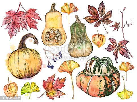 Fall Items. Vector Ink and Watercolor Drawing of Fall Pumpkins, Squash, Leaves, Vines and More