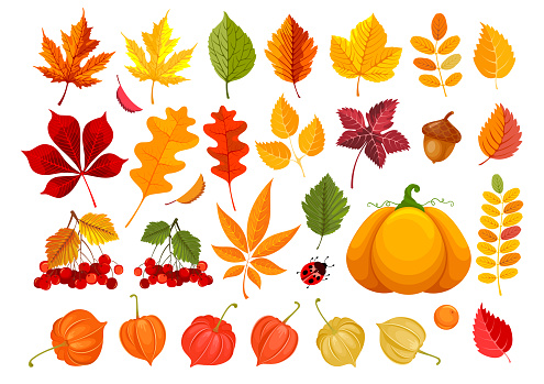 Fall Leaves And Autumn Objects Set