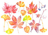 Fall Leaves and Berries Icons. Vector Watercolor Drawings