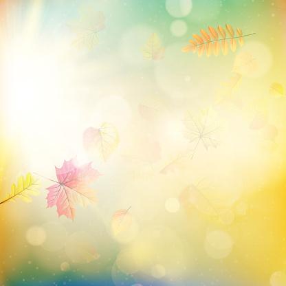 Fall leaves and light burst. EPS 10