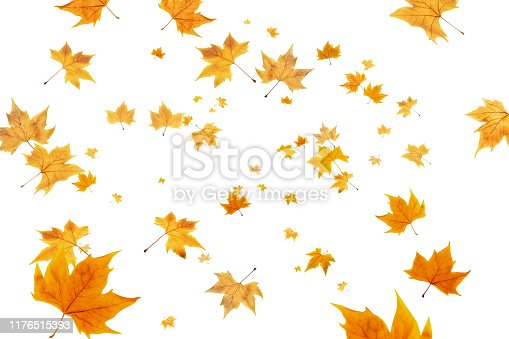 Fall leaves background. Autumn leaves frame, overlay, banner design
