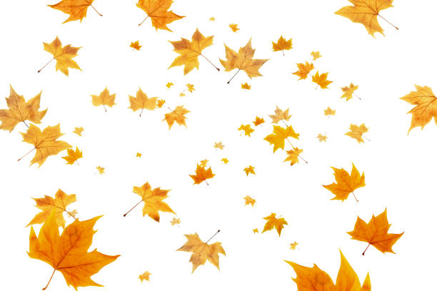 Fall leaves background. Autumn leaves frame, overlay, banner design Fall leaves background. Autumn leaves frame, overlay, banner design fall leaves stock illustrations