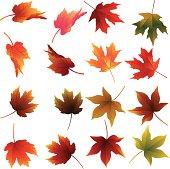Beautiful Fall Leaves.http://i1217.photobucket.com/albums/dd384/vinumar/1of1.jpg?t=1291443518