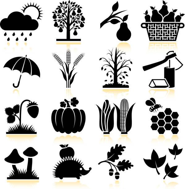 bildbanksillustrationer, clip art samt tecknat material och ikoner med fall (autumn) season black & white vector icon set - höst plocka svamp