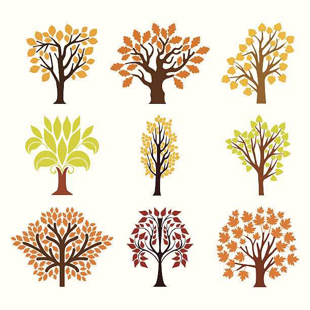 Fall trees Collection of autumn trees. autumn silhouettes stock illustrations