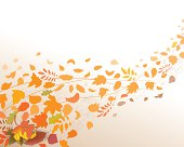 autumn leaves of different types