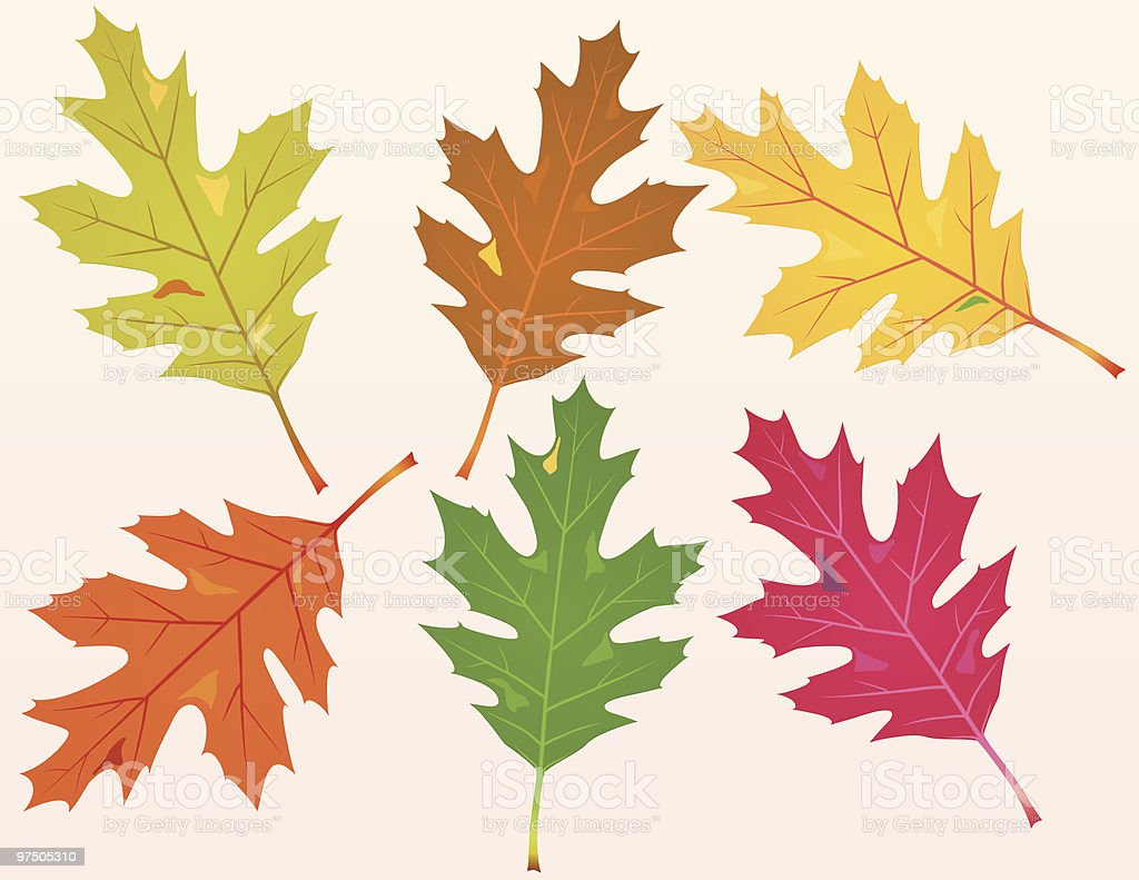 Fallen Oak Leaves royalty-free fallen oak leaves stock vector art & more images of autumn